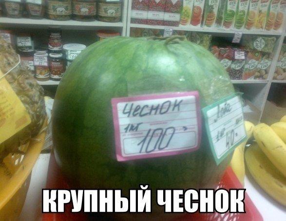 Самые смешные фото в мире с надписями - прикольная подборка 9