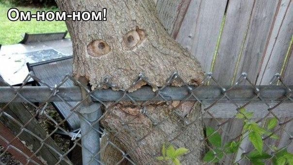 Самые смешные фото и картинки в мире - смотреть бесплатно 2