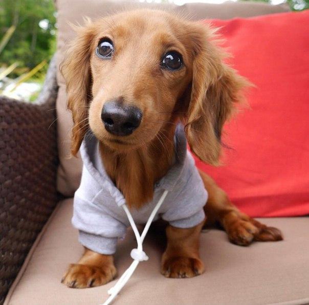 Самые смешные фото собак - прикольные, веселые, ржачные 10