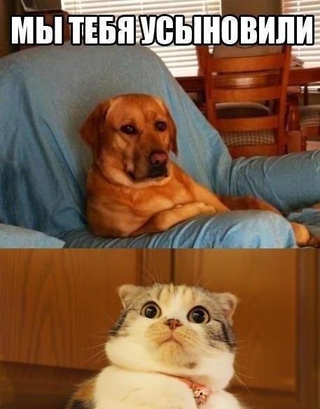 Самые смешные фото собак - прикольные, веселые, ржачные 11