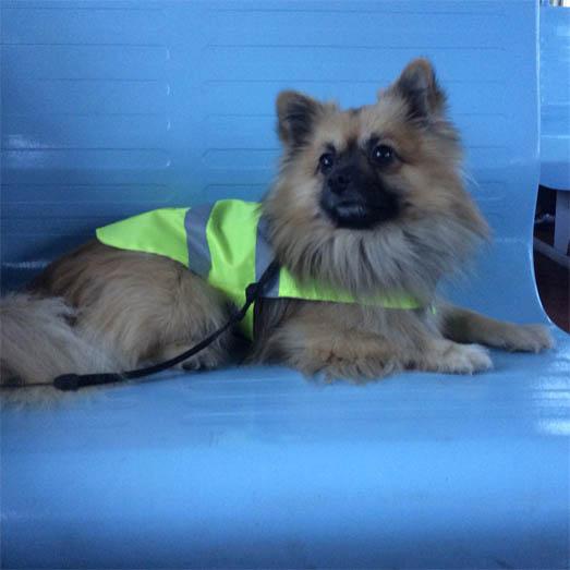 Самые смешные фото собак - прикольные, веселые, ржачные 12