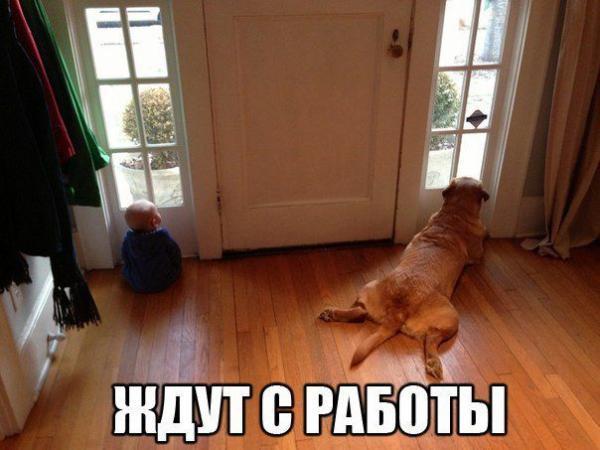 Самые смешные фото собак - прикольные, веселые, ржачные 14