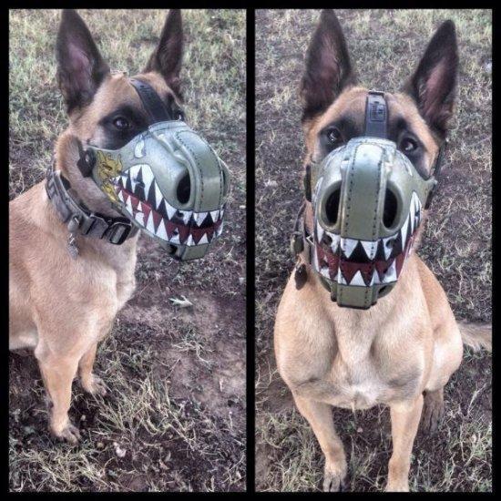 Самые смешные фото собак - прикольные, веселые, ржачные 16