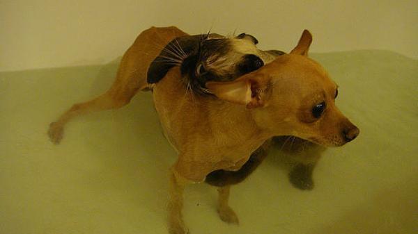 Самые смешные фото собак - прикольные, веселые, ржачные 17