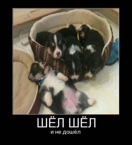 Самые смешные фото собак - прикольные, веселые, ржачные 18