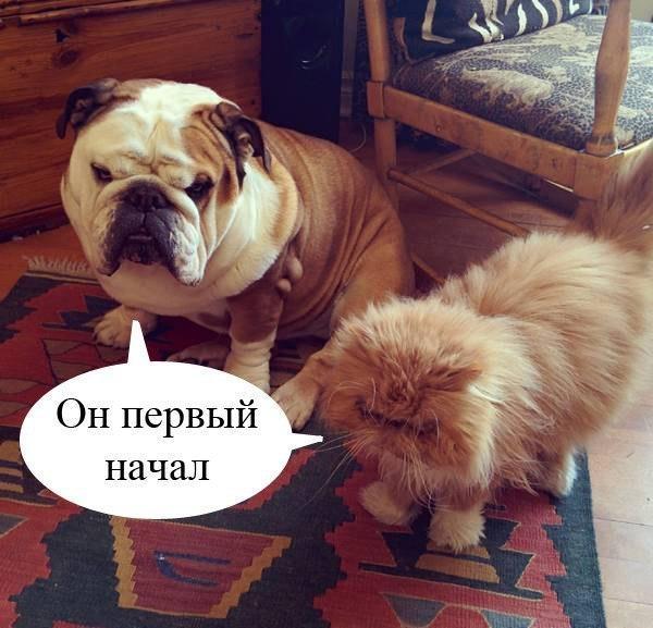 Самые смешные фото собак - прикольные, веселые, ржачные 2