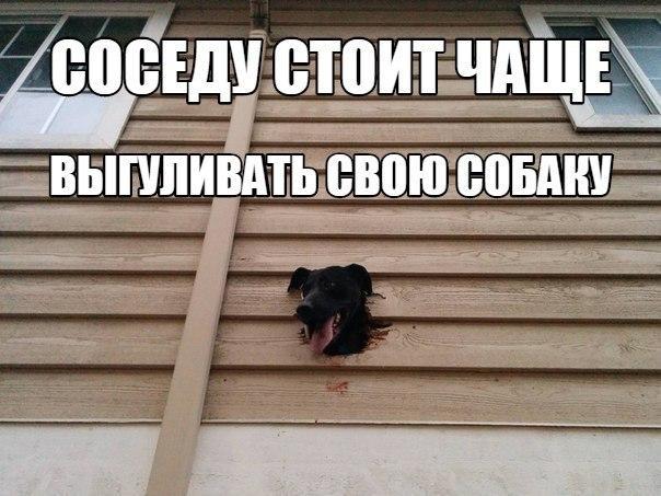 Самые смешные фото собак - прикольные, веселые, ржачные 21