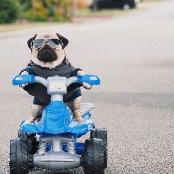 Самые смешные фото собак - прикольные, веселые, ржачные 22