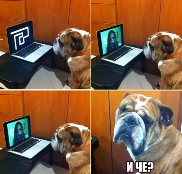 Самые смешные фото собак - прикольные, веселые, ржачные 24