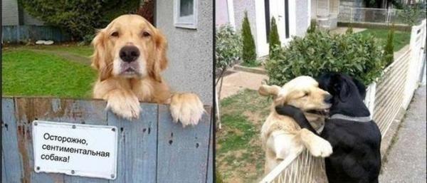 Самые смешные фото собак - прикольные, веселые, ржачные 25