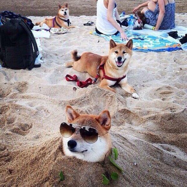 Самые смешные фото собак - прикольные, веселые, ржачные 3
