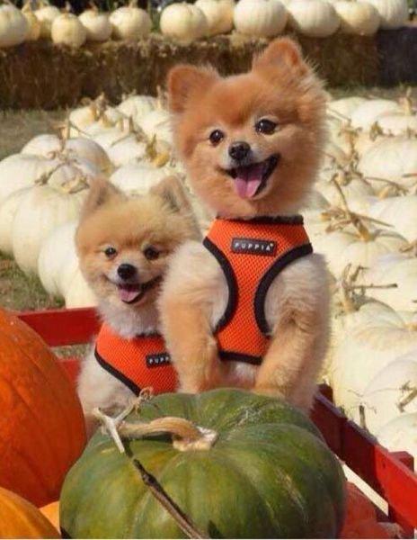 Самые смешные фото собак - прикольные, веселые, ржачные 5