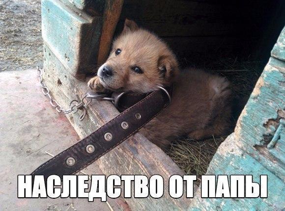 Самые смешные фото собак - прикольные, веселые, ржачные 6