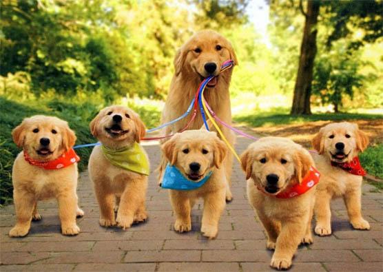 Самые смешные фото собак - прикольные, веселые, ржачные 7