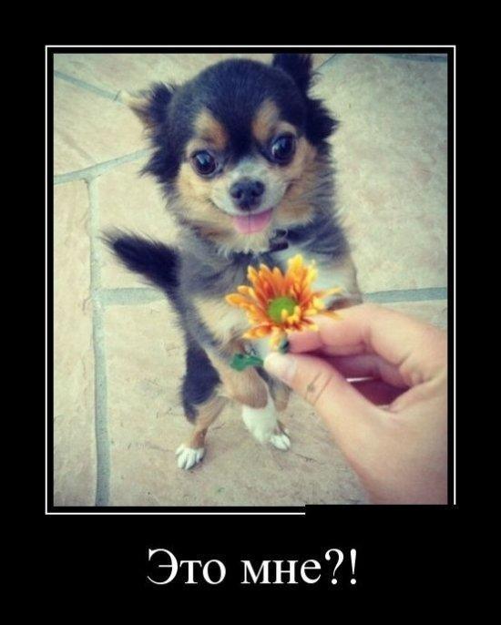 Самые смешные фото собак - прикольные, веселые, ржачные 8