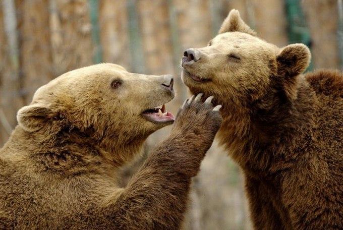 Смешные фотки животных - ржачные, веселые, прикольные, смотреть 20