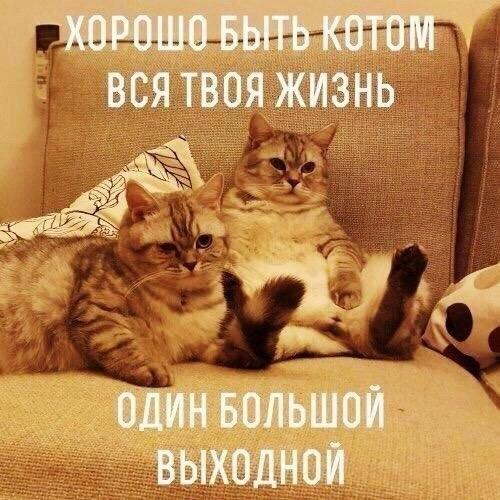 Смешные фотки котов - смотреть бесплатно, веселые, прикольные 10