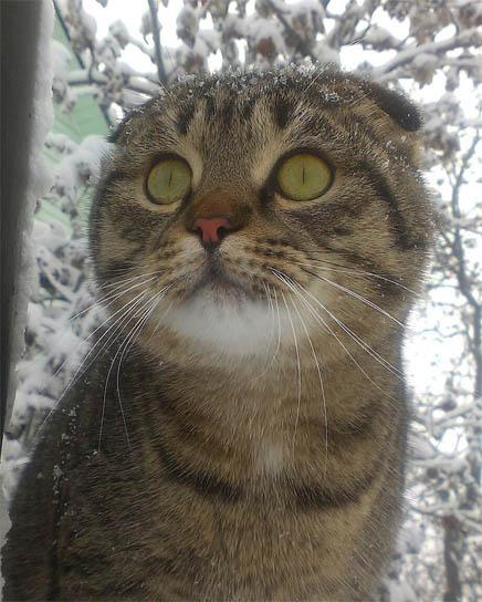 Смешные фотки котов - смотреть бесплатно, веселые, прикольные 12
