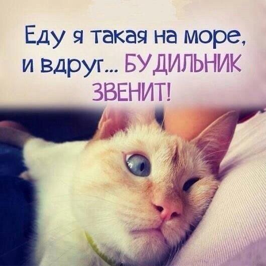 Смешные фотки котов - смотреть бесплатно, веселые, прикольные 14