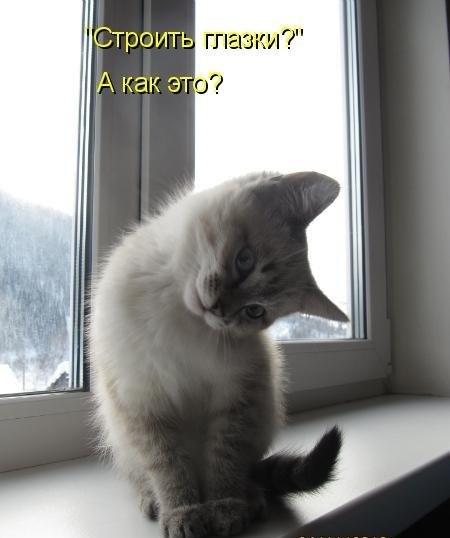 Смешные фотки котов - смотреть бесплатно, веселые, прикольные 15