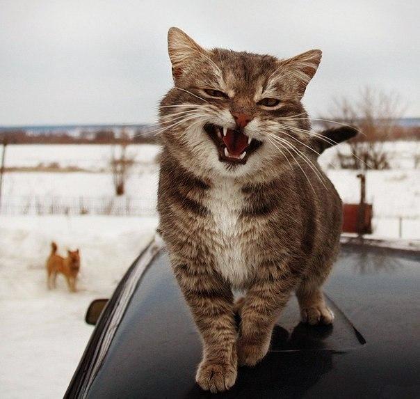 Смешные фотки котов - смотреть бесплатно, веселые, прикольные 16