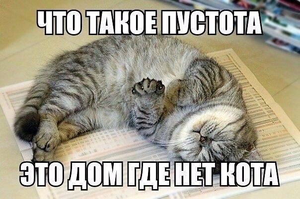 Смешные фотки котов - смотреть бесплатно, веселые, прикольные 17