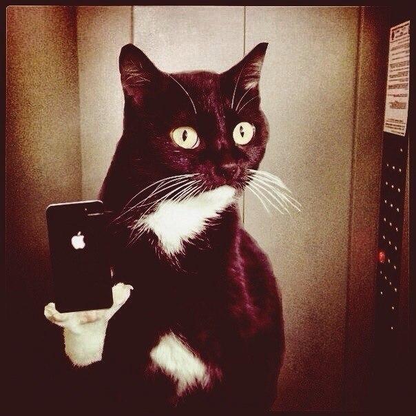 Смешные фотки котов - смотреть бесплатно, веселые, прикольные 18