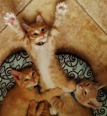 Смешные фотки котов - смотреть бесплатно, веселые, прикольные 4