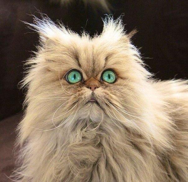Смешные фотки котов - смотреть бесплатно, веселые, прикольные 6