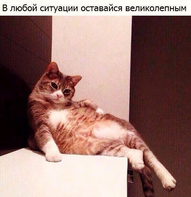 Смешные фотки котов - смотреть бесплатно, веселые, прикольные 7