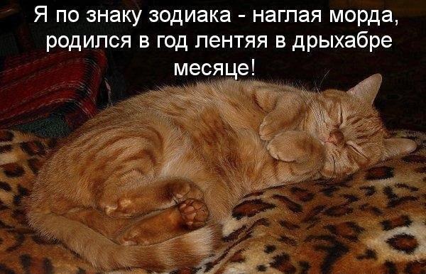 Смешные фотки котов - смотреть бесплатно, веселые, прикольные 8