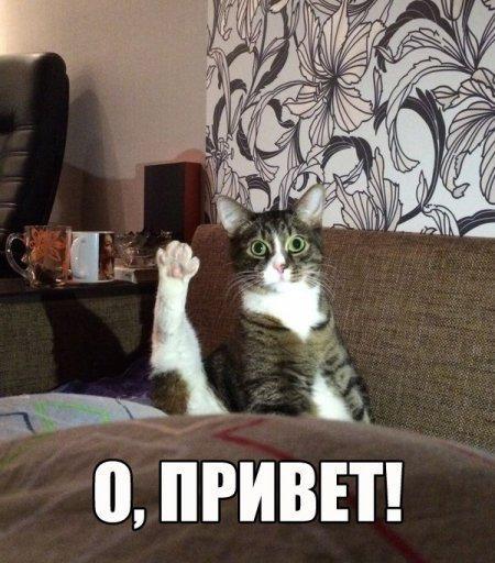 Смешные фото котов и кошек - ржачные, прикольные, веселые 11