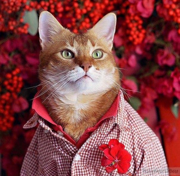 Смешные фото котов и кошек - ржачные, прикольные, веселые 12
