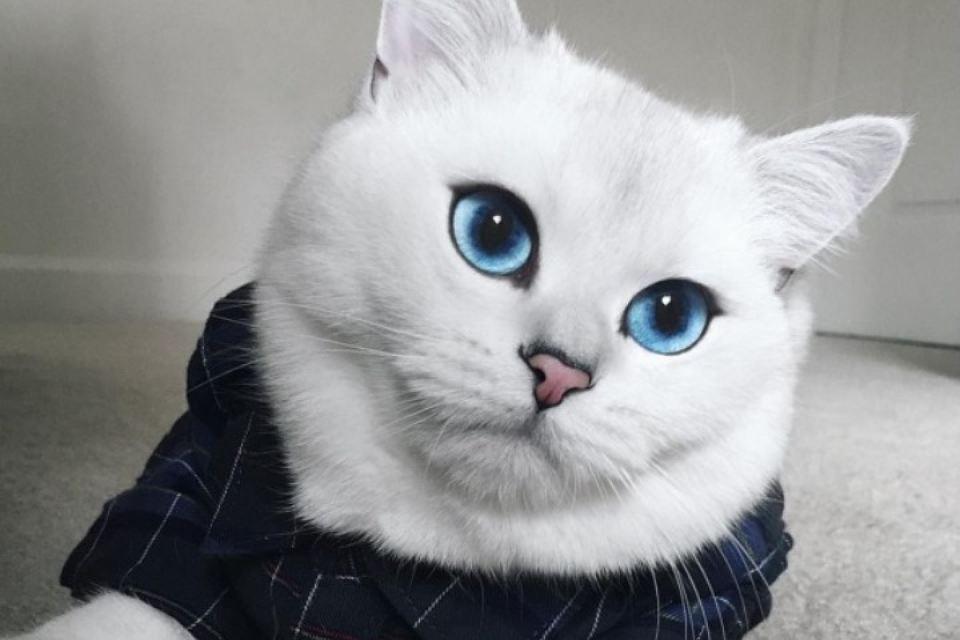 Смешные фото котов и кошек - ржачные, прикольные, веселые 15