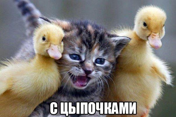 Смешные фото котов и кошек - ржачные, прикольные, веселые 17