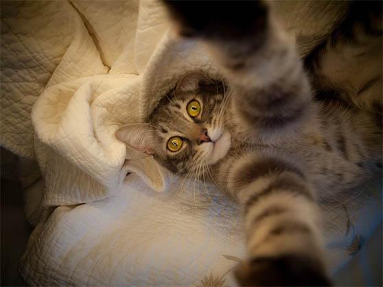 Смешные фото котов и кошек - ржачные, прикольные, веселые 18