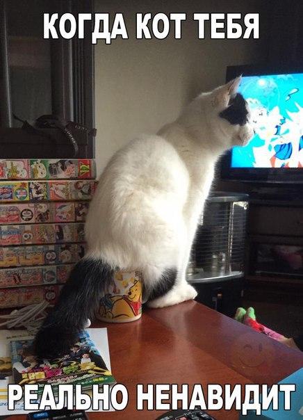 Смешные фото котов и кошек - ржачные, прикольные, веселые 2
