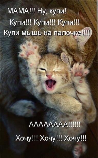 Смешные фото котов и кошек - ржачные, прикольные, веселые 4