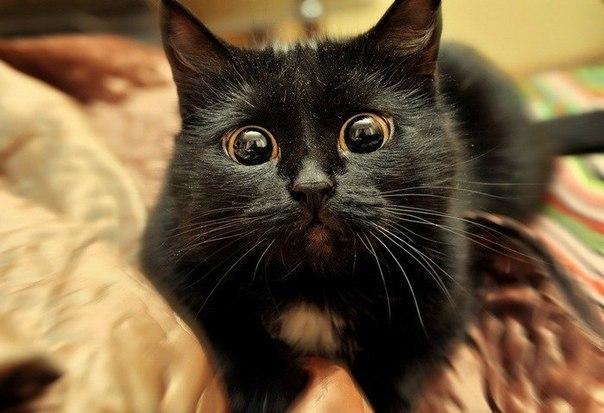 Смешные фото котов и кошек - ржачные, прикольные, веселые 5
