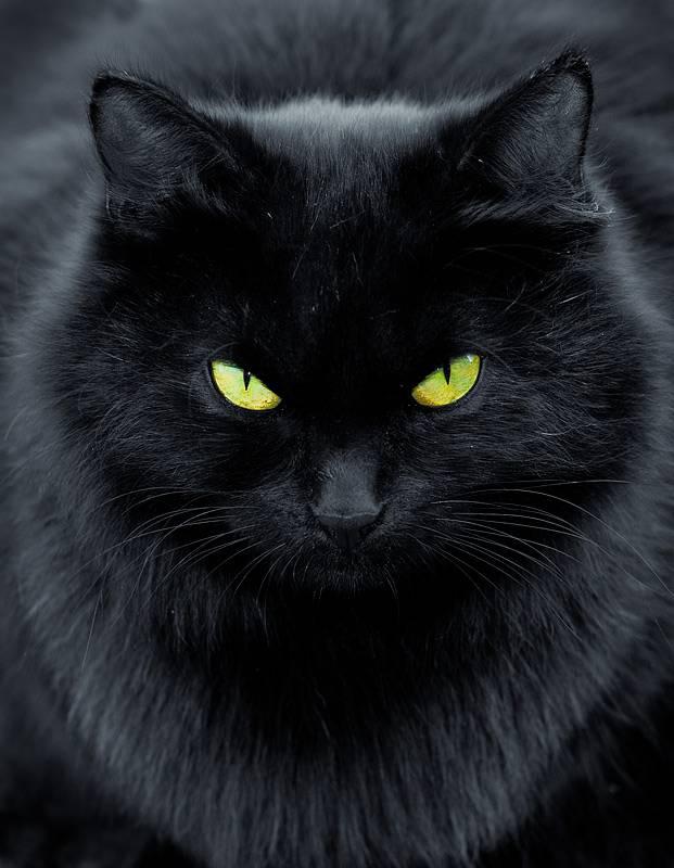 Смешные фото котов и кошек - ржачные, прикольные, веселые 7