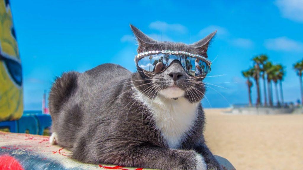 Смешные фото котов и кошек - ржачные, прикольные, веселые 9