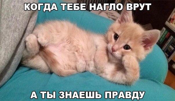 Смешные фото кошек с надписями - ржачные, веселые, прикольные 1