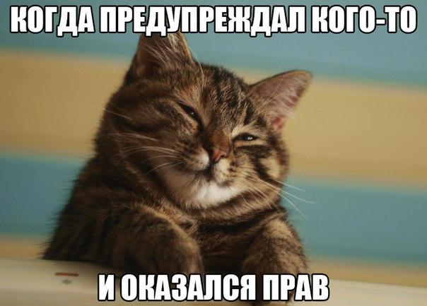 Смешные фото кошек с надписями - ржачные, веселые, прикольные 10