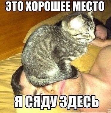 Смешные фото кошек с надписями - ржачные, веселые, прикольные 16