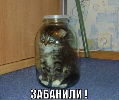 Смешные фото кошек с надписями - ржачные, веселые, прикольные 3
