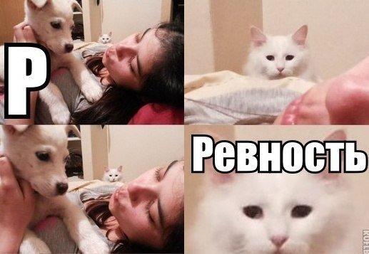 Смешные фото кошек с надписями - ржачные, веселые, прикольные 7