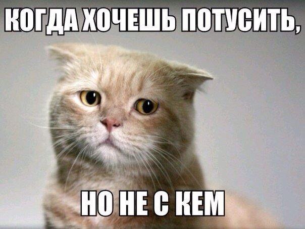 Смешные фото кошек с надписями - ржачные, веселые, прикольные 9