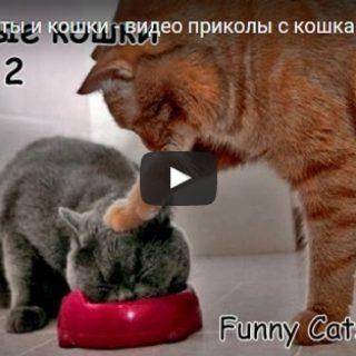 Смотреть смешные видео про котов до слез - веселые, прикольные