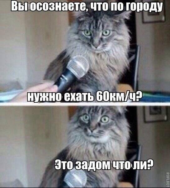 Смотреть смешные картинки с котами и надписями бесплатно 1