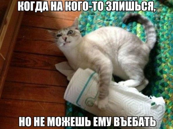 Смотреть смешные картинки с котами и надписями бесплатно 10